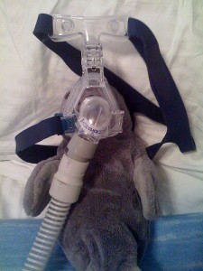 Manatee wearing a cpap device